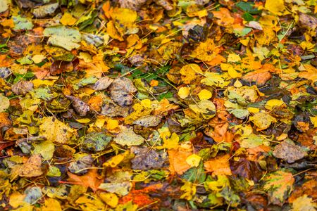 autumn background of different types of fallen wooden leaves with selective focus Foto de archivo