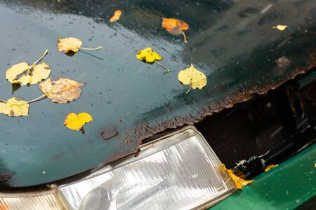 old wet and rusted car bonnet with headlamp under autumn birch leaves selective focus and blur background Stok Fotoğraf