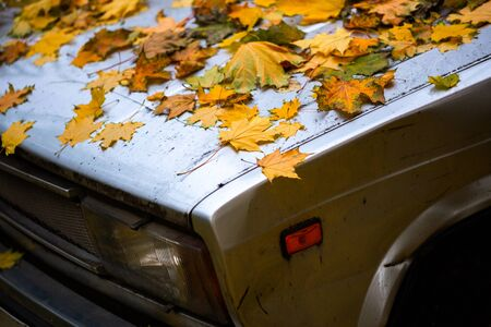 fallen maple leaves on old beaten car bonnet - close up autumn background with selective focus and blur