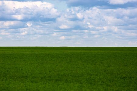 flat green soybean field with cloudy sky and focus on background with optically blurred foreground.