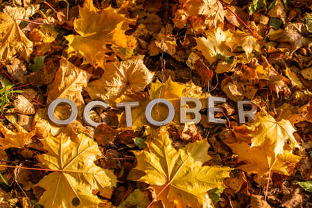 the word october laid with silver metal letters on the ground dry maple leaves