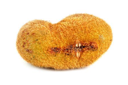 one ugly kiwi mutant fruit isolated on white background