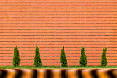 row of five small conical thuja trees in front of red brick wall and parametric plywood bench Stock fotó