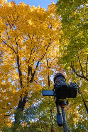 modern digital camera on a tripod pointed toward yellow autumn maple tree Stock fotó