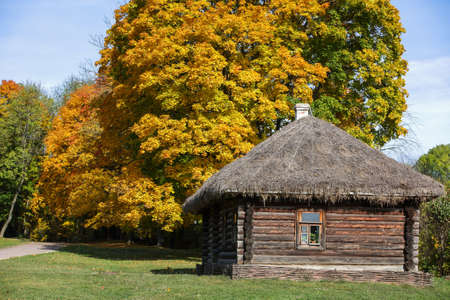 traditional russian log house with straw roof and one window in front of autumn lane with yellow autumn maple trees