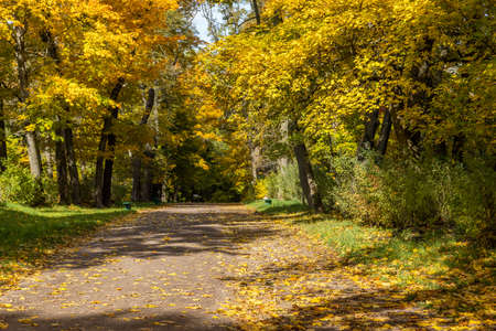 autumnal park with yellow maple tress and fallen leaves Stock fotó