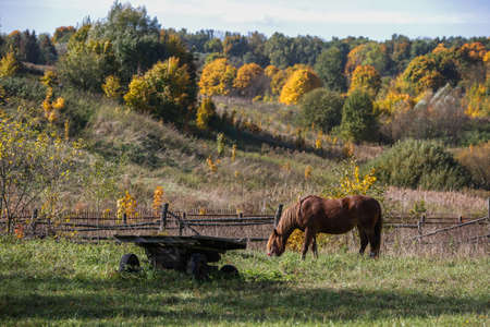 brown horse grazes next to an old wooden cart against the background of an autumn forest and a ravine
