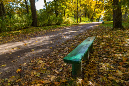 empty green wooden bench in autumnal park with yellow maple tress and fallen leaves Stock fotó