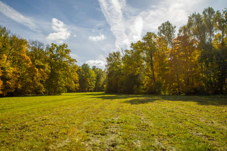 sunny autumnal meadow and yellow forest on its edges Stock fotó