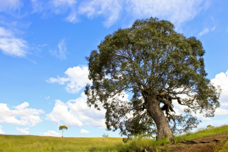 Big tree along the creek , blue sky grassland on sunny day photo