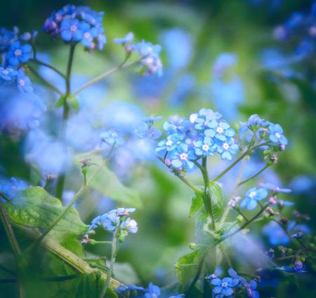 Blue pastel flowers on a soft background. Фото со стока