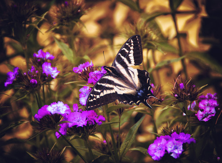 Butterfly in a spring garden with flowers.
