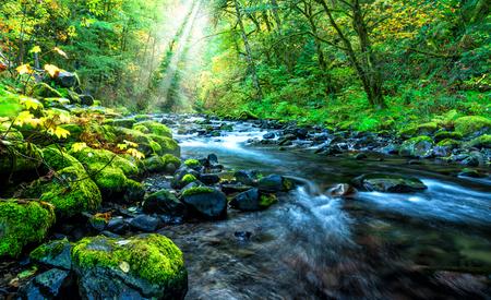Creek, Columbia River Gorge, Oregon Фото со стока