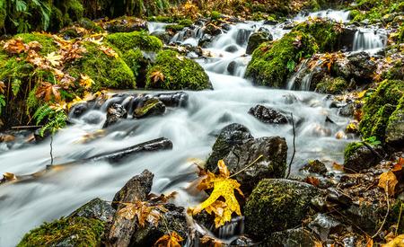 Wahkeene Creek, Columbia Gorge, Oregon