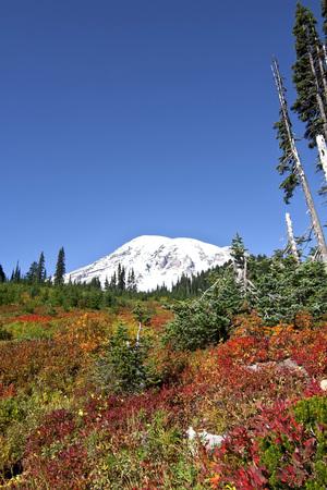 Autumn colors on Mt. Rainier National Park.