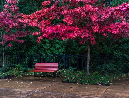 Red bench under fall colors on a rainy day. Фото со стока