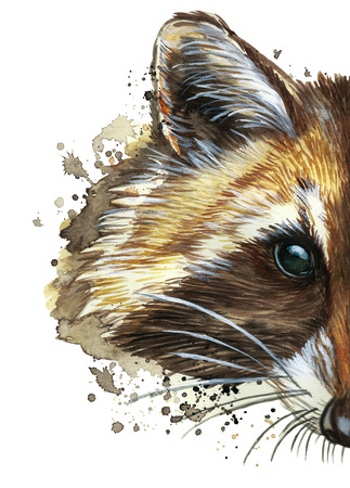 watercolor picture of an animal of the genus of predatory mammals of the raccoon family, raccoon raccoon, raccoon, raccoon portrait, raccoon head, fluffy wool, winter skin, white background for decora Stock fotó