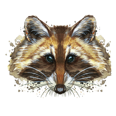 watercolor picture of an animal of the genus of predatory mammals of the raccoon family, raccoon raccoon, raccoon, raccoon portrait, raccoon head, fluffy wool, winter skin, white background for decora Reklamní fotografie
