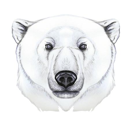 Drawing with watercolor of predator mammal polar bear