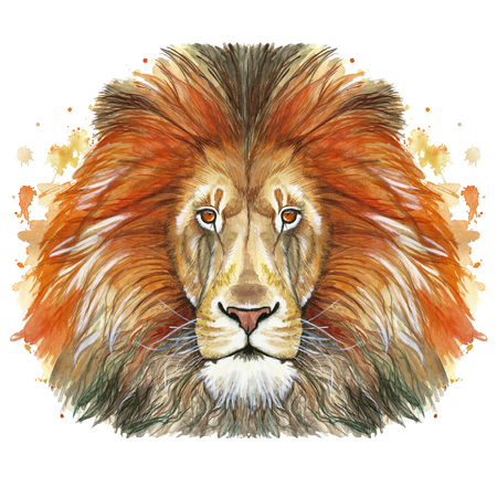 Watercolor drawing of an animal mammal animal predator of red lion, red mane, lion-king of beasts, portrait of greatness, strength, kingdom, india, in front of a white background