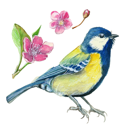 watercolor drawing on the theme of the spring, heat, illustration of a bird of the order of the passerine-shaped large tit-flies, with open wings, feathers, with yellow breast and blue plumage, hyperreali