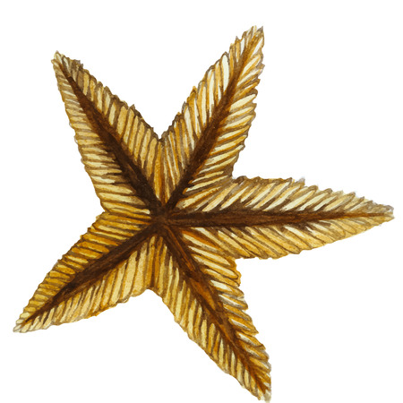 Drawing by watercolor red starfish in the class of invertebrates such as echinoderms on a white background for print shop and design, children's drawing.