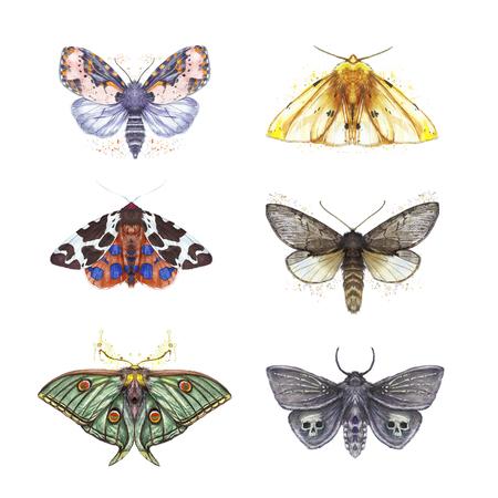 Watercolor drawing of butterflies shaggy, a set of butterflies, Dipper reddish, yellow bear, Peacock eye Artemis, beautiful wings for decoration, design