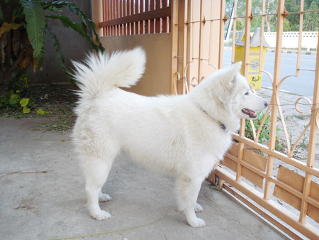 bowwow: dog
