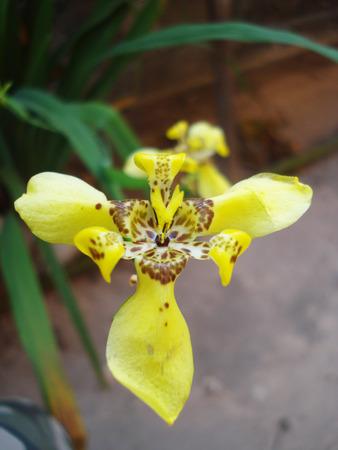 plantae: orchid