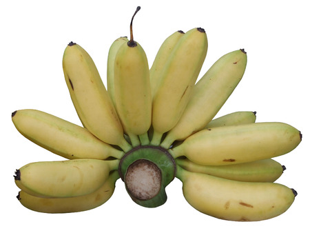 plantae: bananas Stock Photo
