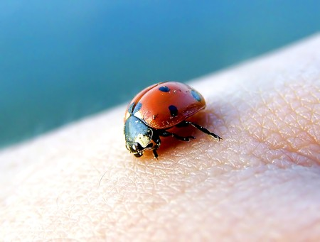 ladybug crawling on the human skin Stock Photo - 4560486