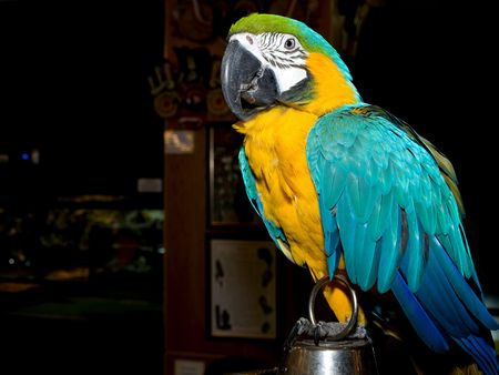 Portrait of colorful parrot sitting on the cage photo