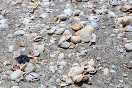 tons: Tons of shells on a beach