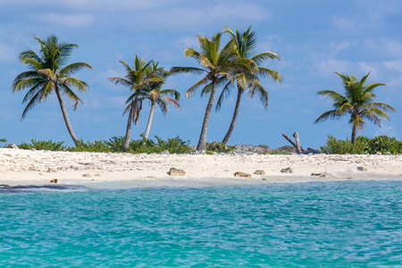 Palm Trees on the Beach - Riviera maya, Mexico
