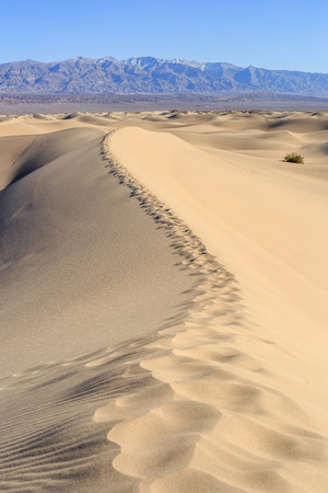 stovepipe: Stovepipe Mesquite Sand Dunes Death Valley Stock Photo