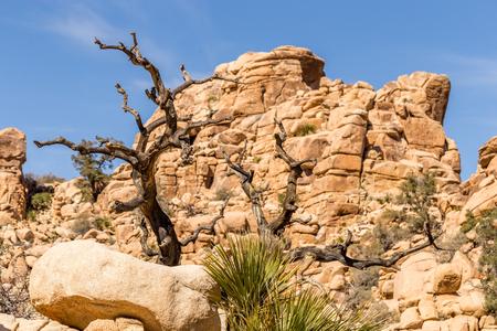 joshua: Hidden Valley Trail in Joshua Tree Stock Photo