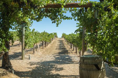 wine tasting in Temecula Valley