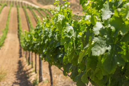 wine country: Temecula valley wine country in California