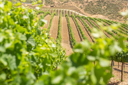 wine country: Temecula wine country in California