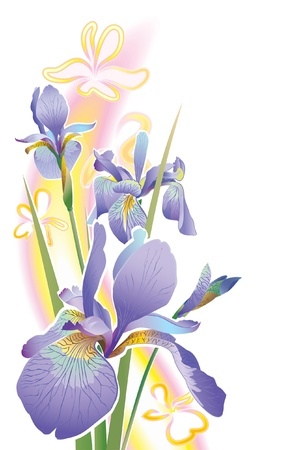 purple iris: Drawing of a flower on a white background