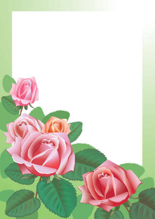 Vektronyj drawing of roses Vector