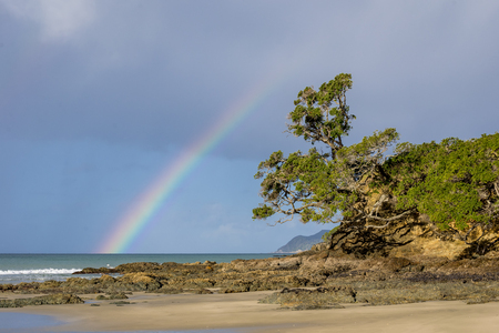 clinging: A lovely rainbow from sea to sky frames a pohutakawa tree in a sandy cove at Waipu Cove in Northland Stock Photo