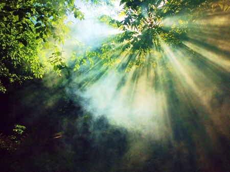 Light rays through the treetops