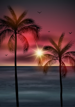 Vector illustration of  Palm tree leaves on summer background. Palm tree silhouette