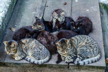 野良猫家族。猫と子猫を座っているのグループです。