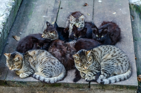 forbidden love: Stray cats family. Group of sitting cats and kitten.