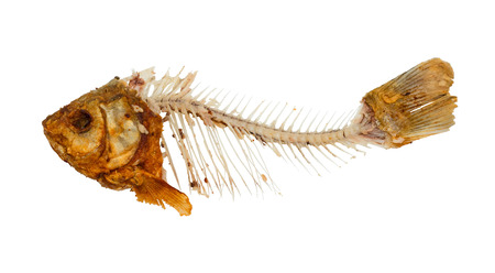 misery: Skeleton of fish - symbol for food shortage and misery.