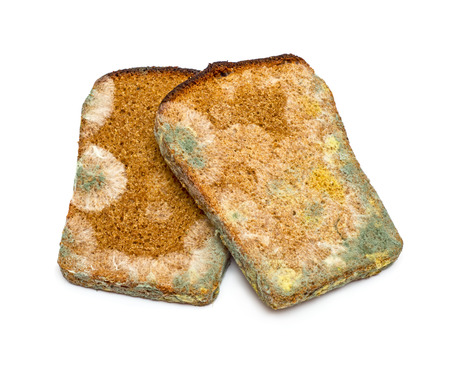 Two slices of mouldy rye bread isolated on white background photo