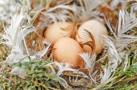 Three brown eggs in the nest