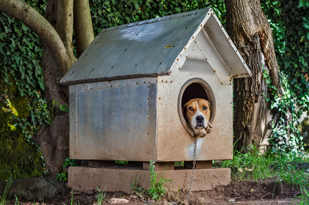 humane: Sad dog watching out of his kennel Stock Photo